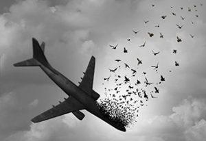 Aves impactan en avión