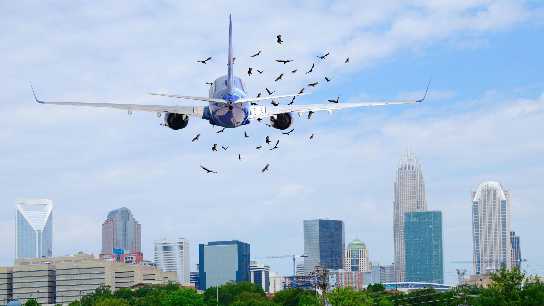 Impactos de pájaros contra aviones